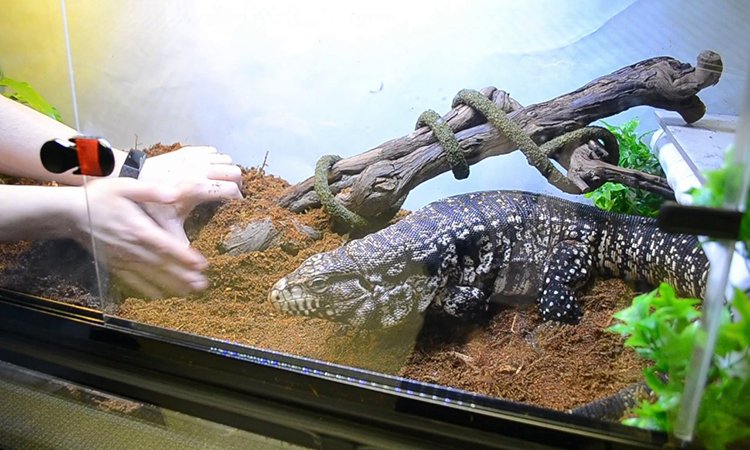 Top 10 Best Reptile Cage In 2021