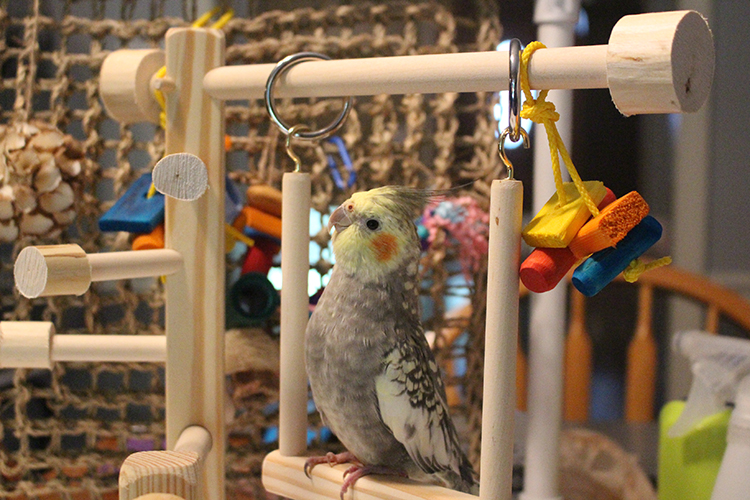 Parrot Gyms