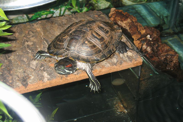 Top 10 Best Zoo Med Turtle Docks In 2021