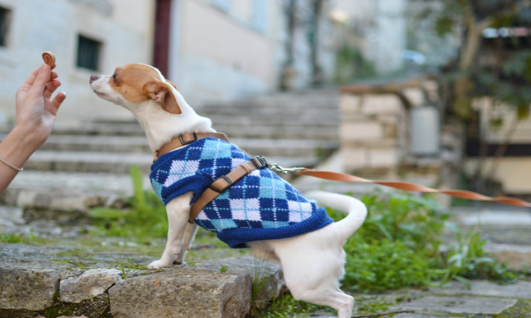 Dog Coat With Harness