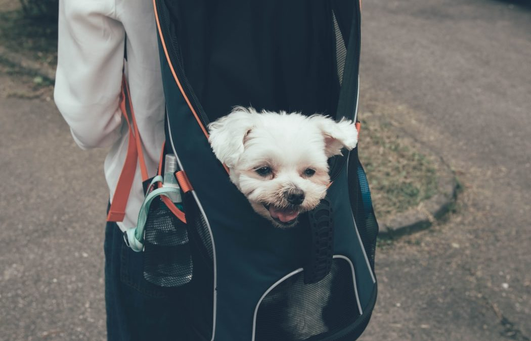 Backpack Pet Carriers for Dogs