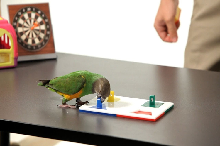Puzzle For Parrot