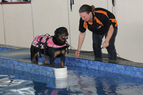Walk the Leased Dog in a Little Deep Water | How To Teach Your Dog How To Swim