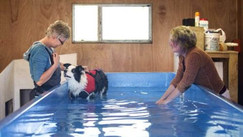 Start by Walking the Dog within a Few Inches of Water | How To Teach Your Dog How To Swim