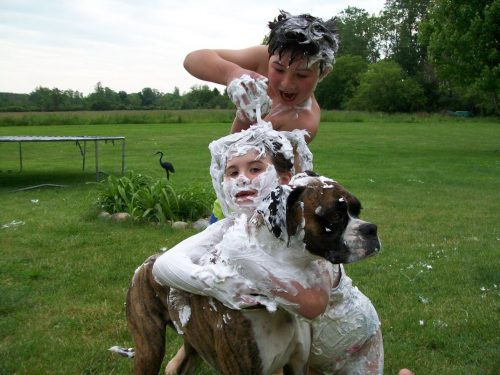 Stock extra shaving cream   How To Keep Your House Clean From Pet?