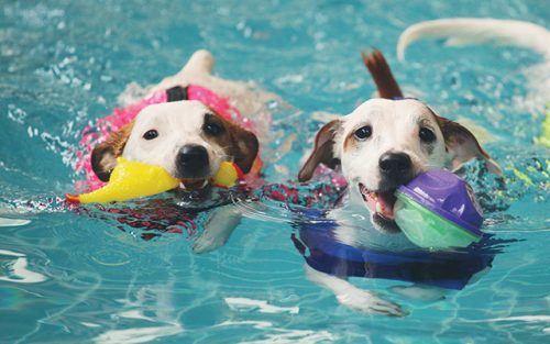 Leave the Dog into the Water Alone with Floating Tubes | How To Teach Your Dog How To Swim