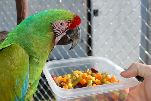 How to Make a Good and Wholesome Diet? | Do Birds Need Vitamins?
