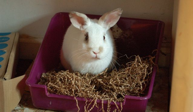 Junk Mail Homemade Chew Toy | Homemade Toy For Rabbits