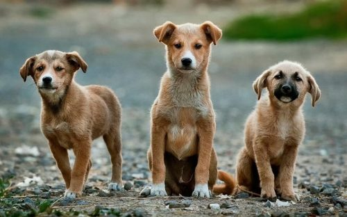 You Stop Pet Overpopulation | 10 Reasons Why You Should Adopt A Stray Animal?