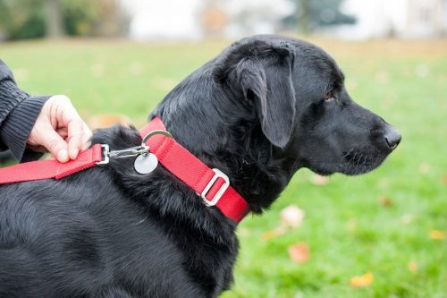 Choosing the Wrong Collar | Things You Should Not Do With Your Dog