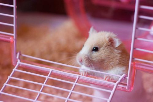 Take out the Hamster for Explore Outside World | A Simple Guide To Take Care Of A Hamster