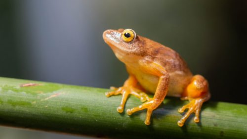 Anura | Characteristics Of Amphibians For Your Possible Next Pet