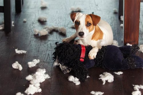 Prevent it from getting messy   How To Keep Your House Clean From Pet?