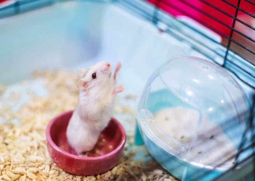 Give a Sand Bath to Your Hamster | A Simple Guide To Take Care Of A Hamster