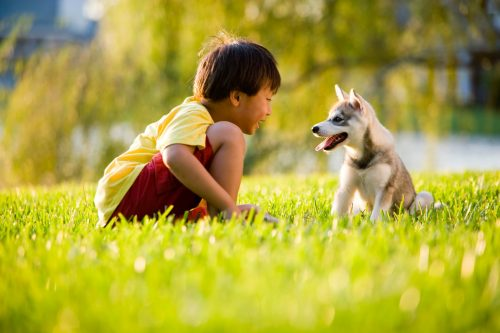 Pets Rejuvenate the Child Inside You |The Benefits Of Owning A Pet