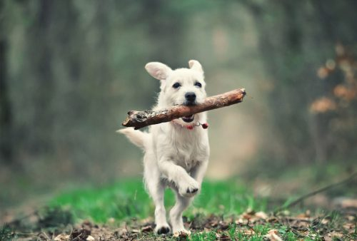Running With A Stick in Its Mouth | Things You Should Not Do With Your Dog