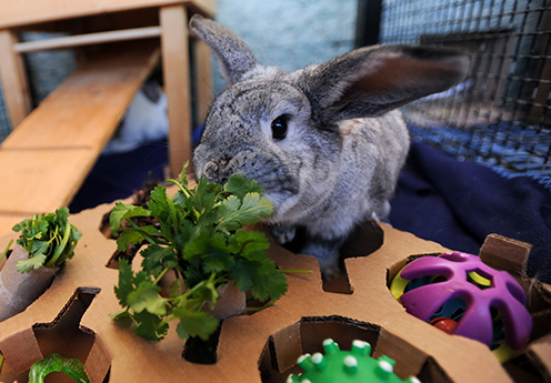 Things to Look Out for | Homemade Toy For Rabbits