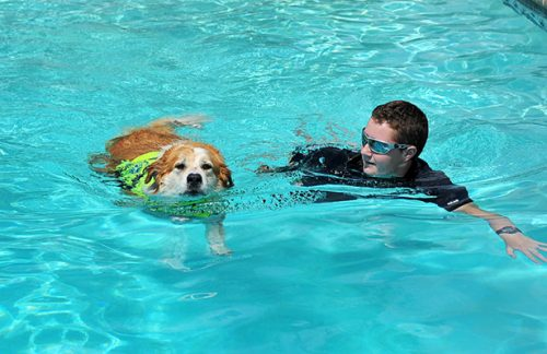 Enjoy Swimming with Your Dog | How To Teach Your Dog How To Swim