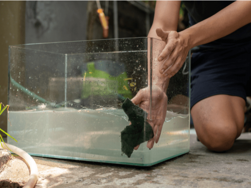 Cleaning Out the Fish Bowl | How to Clean a Fishbowl?