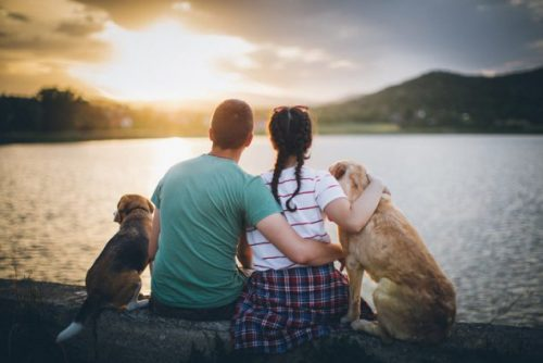 Adopting Encourages Others to Adopt