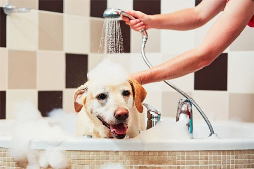Access to the Bathroom | Things You Should Not Do With Your Dog