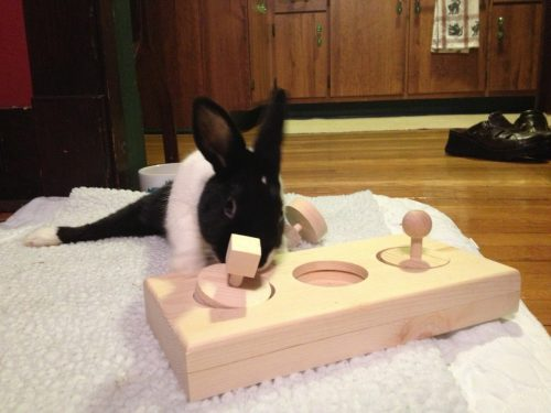 Wood Block Homemade Chew Toy | Homemade Toy For Rabbits
