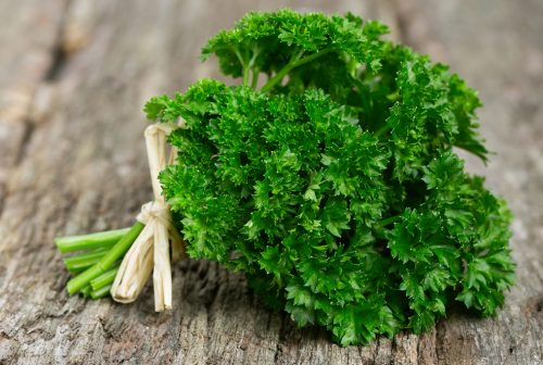 Parsley | What Vegetables Are Safe To Feed Your Pet Bird