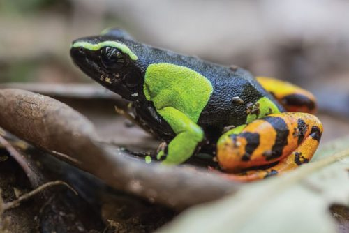 Variety in Size and Structure | Characteristics Of Amphibians For Your Possible Next Pet