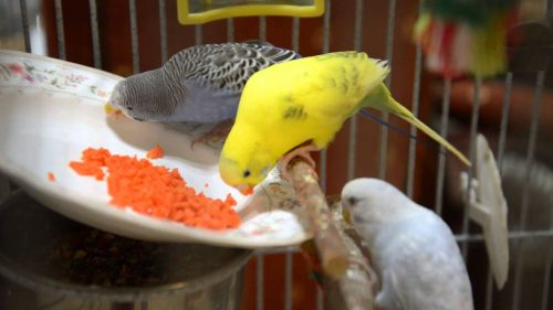 Carrots | What Vegetables Are Safe To Feed Your Pet Bird