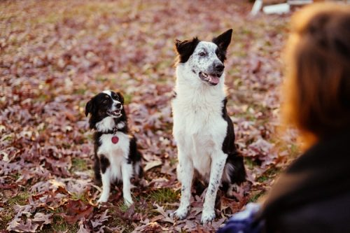 Are You Ready for Adjusting | Important Things To Consider Before Getting A Pet