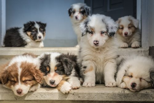 What Breed Should You Get | Important Things To Consider Before Getting A Pet