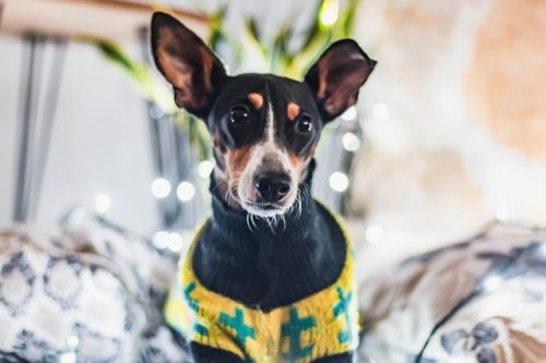Some Useful Tips Before Clothing Your Dog | Reasons Why Your Dog Should Wear Clothes