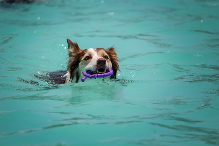 How To Teach Your Dog How To Swim