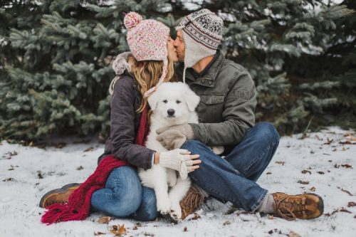 Winter Care | | How To Take Care Of Your Dog During Summer And Winter