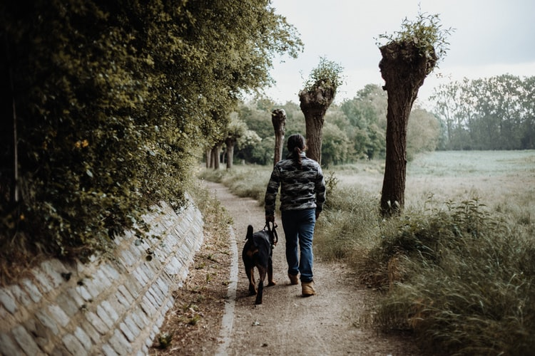 Are They Compatible with Your Lifestyle | Important Things To Consider Before Getting A Pet
