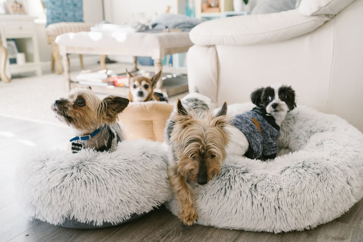How To Keep Your House Clean From Pet?
