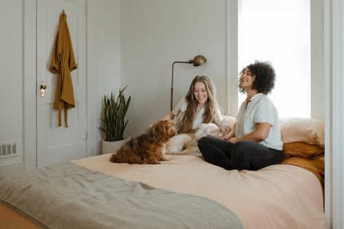 Is Your Home Pet Proof | Important Things To Consider Before Getting A Pet