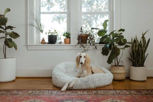 How to Heat a Dog House Without Electricity?