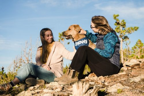 Summer Care   How To Take Care Of Your Dog During Summer And Winter