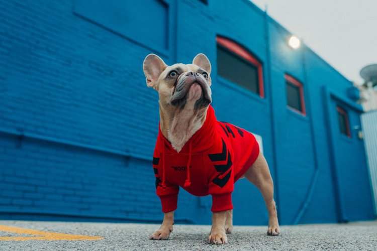 Reasons Why Your Dog Should Wear Clothes