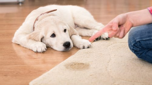 Have emergency cleaners ready to go | How To Keep Your House Clean From Pet?