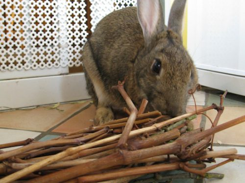 Stick and Toilet Paper Roll Homemade Chew Toy | Homemade Toy For Rabbits