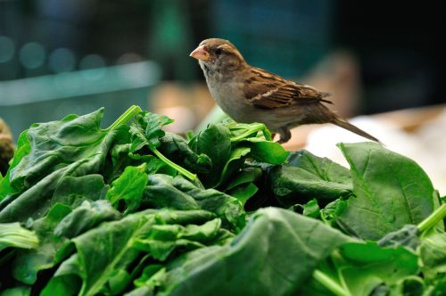 Greens | Type Of Vitamin Foods For Pet Birds