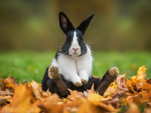 Lifespan Of Rabbits | How To Take Care Of Your Rabbits