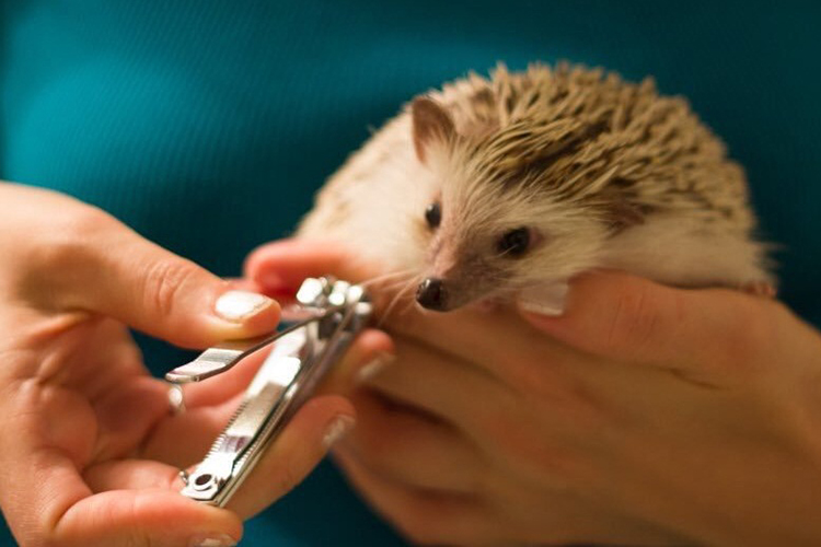 Nail Clippers For Hedgehogs