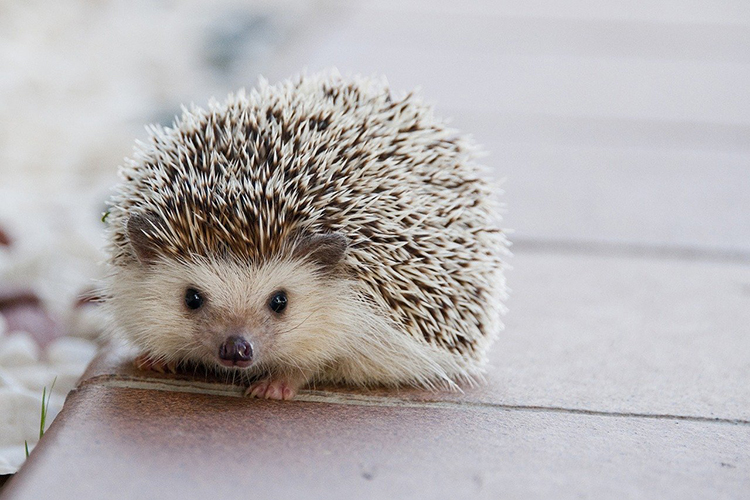 Hedgehog Cleaning Supplies