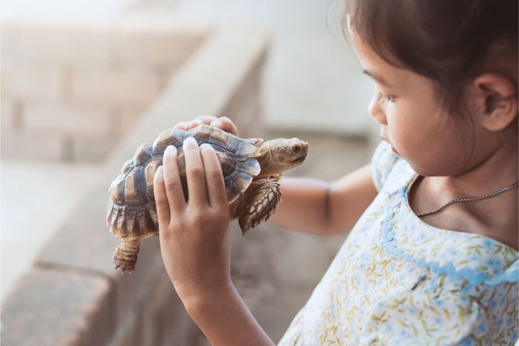 Are Reptiles Good Pets for Kids?