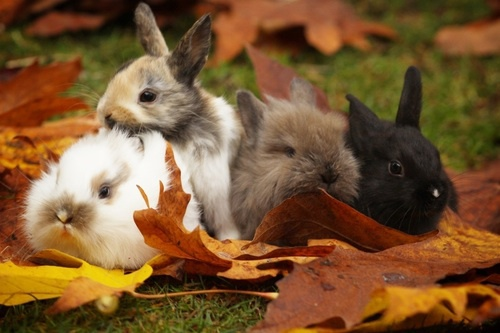 Rabbits Love Staying With Other Rabbits | How To Take Care Of Your Rabbits