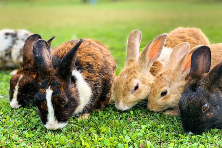 How To Take Care Of Your Rabbits