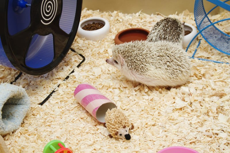 Hedgehog Safe Bedding